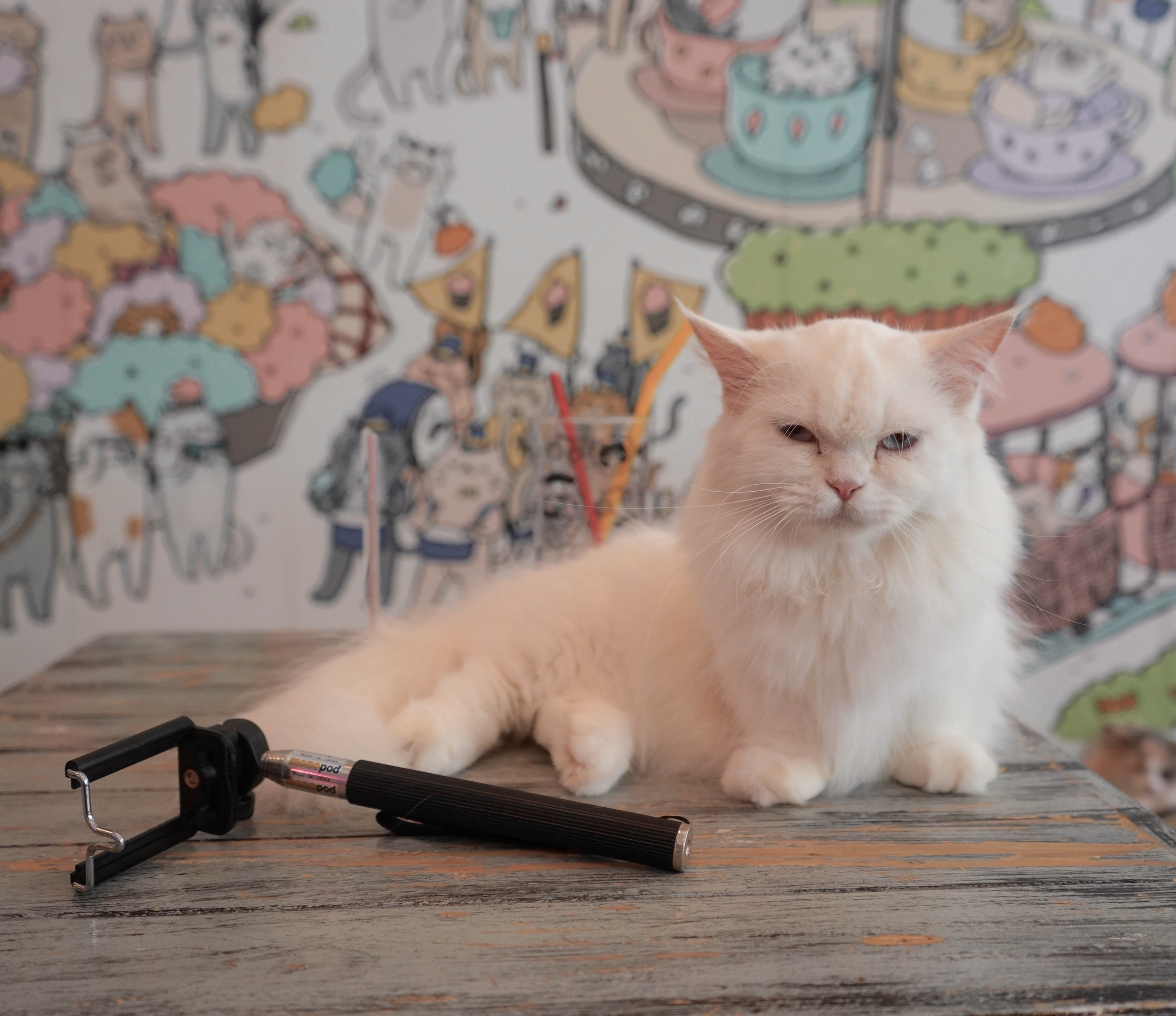 Caturday Cat Cafe Opening Hours