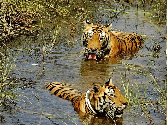 Image result for Manas National Park