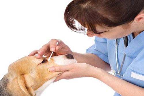 maladie-assurance-chien-assuropoil