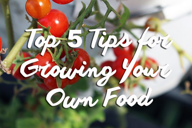 5 tips for growing your own food