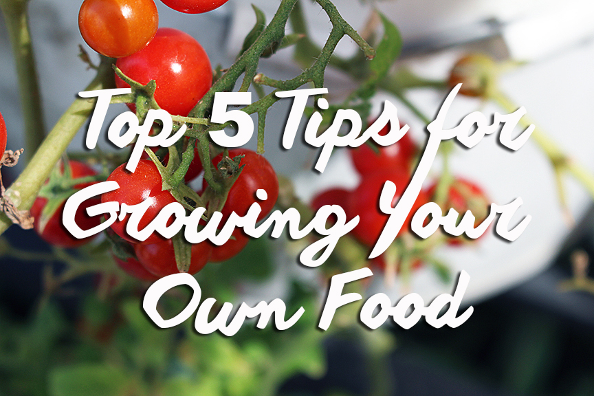 Top 5 Tips for Growing Your Own Food