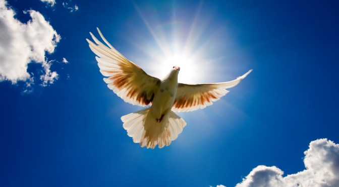 The frail Dove takes flight and how we can live to Infinity #pause #4Gretchen #TuesdayTakeaway
