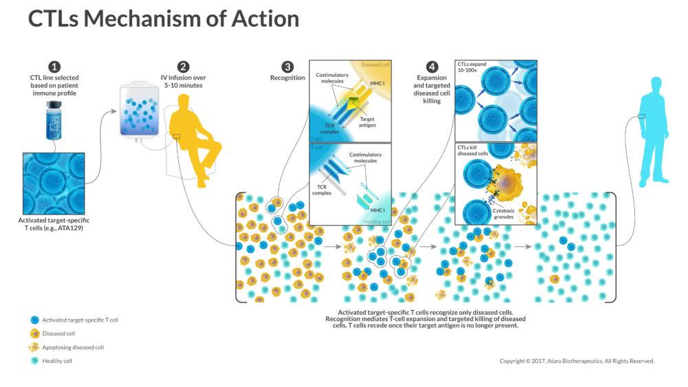 MECHANISM OF ACTION - Atara Biotherapeutics