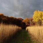 CC15-Prairie-Golden-Autumn-Samhain13-300x225