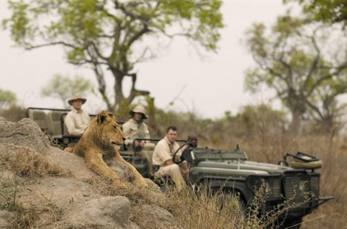 South Africa Luxury Safari - Singita Lion