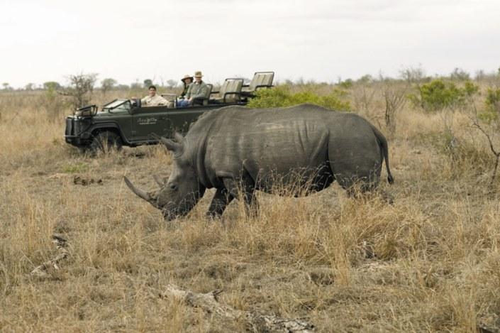 South Africa Luxury Safari - Rhino