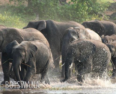 Luxury Safaris Botswana - Elephants in the Okavango Delta