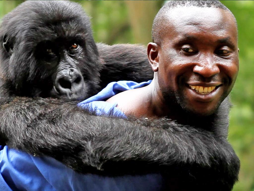 Virunga Sekwekwe Gorilla Orphanage - Congo Safari - Andre
