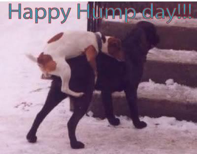 1happy-hump-day