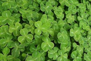 St. Patrick's Events Galore in Atlanta!
