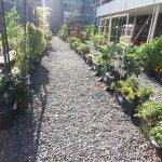 Google garden.