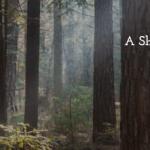 """Casting Independent short film """"Stiff"""" in Philadelphia"""