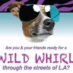 New Cable Network Show Casting Animal Lovers in Los Angeles
