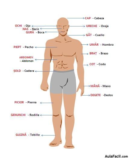 ⏩El cuerpo humano - Rumano para principiantes AulaFacil Los