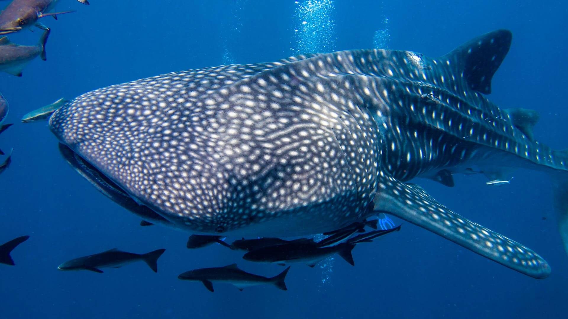 3d Weather Live Wallpaper Similan Island Liveaboards Aussie Divers Phuket