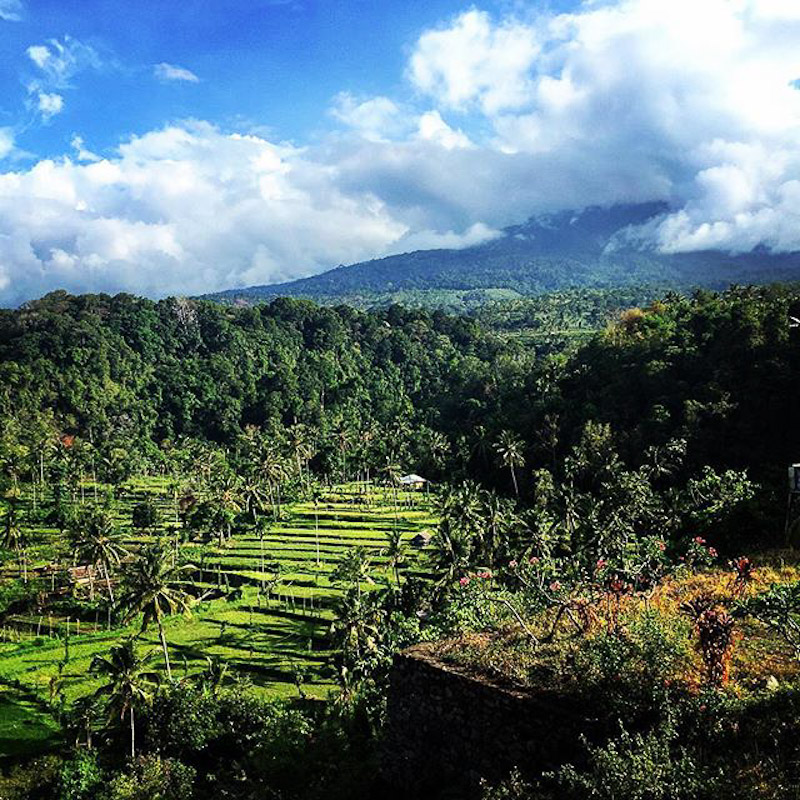 lombok terrace farm indonesia