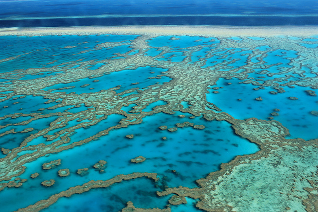 barrier reef above