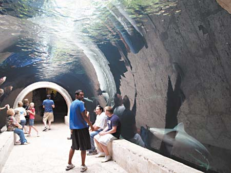 Day Trips: Drop by the Dallas World Aquarium at feeding time for an