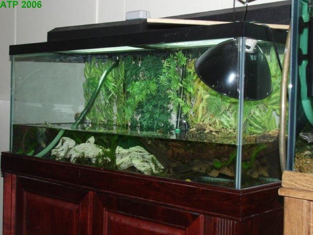 Turtle Tank 75 Gallon Gallery Of Aquariums Terrariums