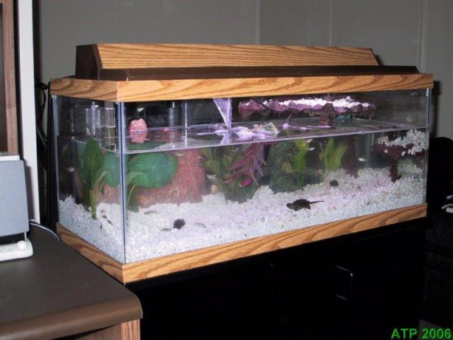 20 gallon long tanks 1 of 11 20 gallon long glass aquarium back to