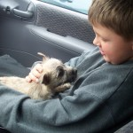 Dogs Help Autistic Children Bond and Grow: Part 1