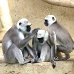Researchers found some monkeys possess autism-linked gene mutations