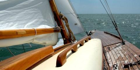 requin sail boat