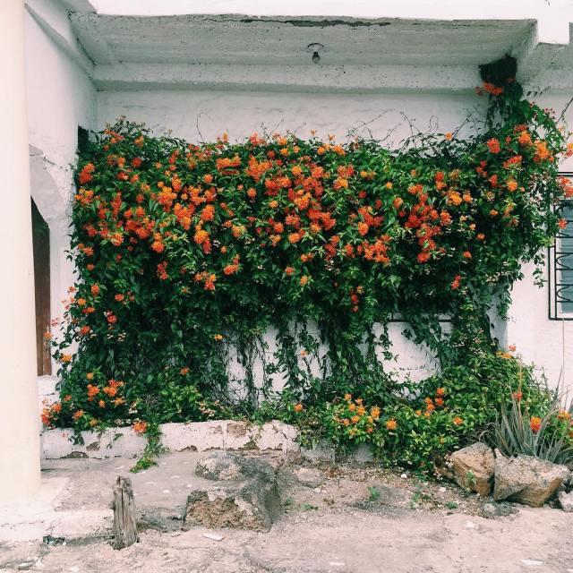 Garden goals autumnandmomdotheworld galapagosislands islasantacruz