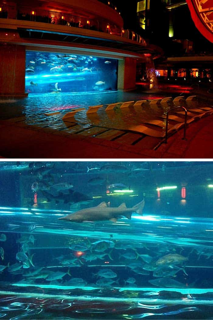 Golden Nugget Hotel and Casino – Las Vegas, NV. Have you ever wanted to go through a shark tank without getting your leg bit off? That is entirely possible at the Golden Nugget pool in downtown Las Vegas, which features a water-slide straight through a live shark tank.