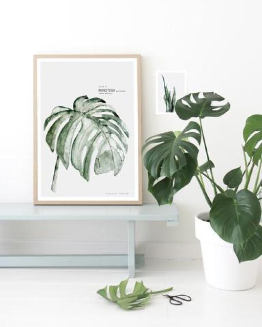 Où Trouver Des Affiches Végétales ? • Aventure Déco