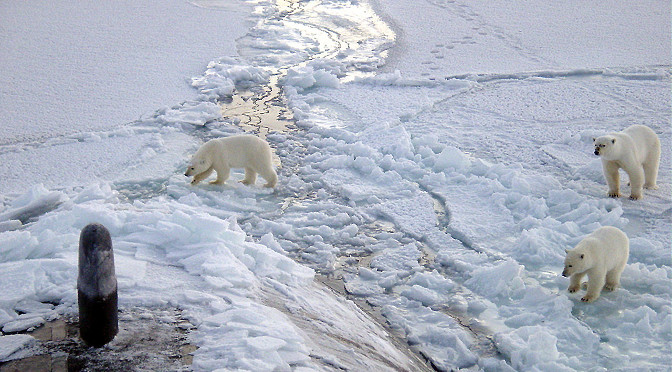 1280px-Polar_bears_near_north_pole