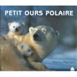 petit-ours-polaire