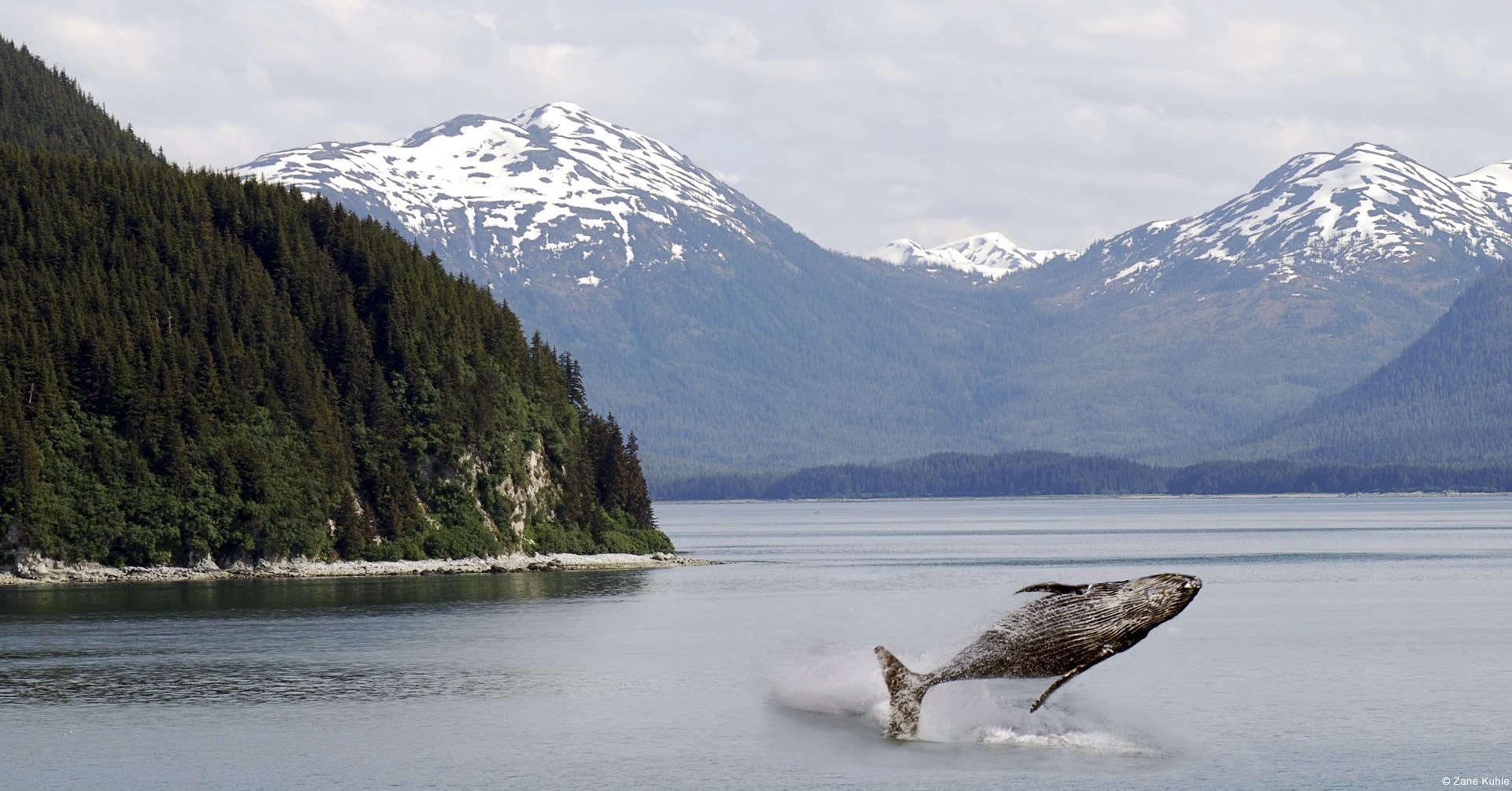 Forest Animal Wallpaper Take A Nature Tour Of Alaska Avis Alaska
