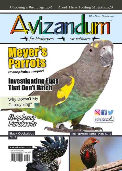 October 17 Cover