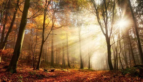 Fall Foliage Wallpaper 1920x1080 Wald Warum Der Wald F 252 R Uns So Gesund Ist A Vogel