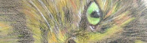 Using derwents on coloured pastel board, very grainy texture in this portrait of my cat