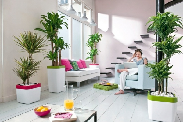 Feng Shui plants for harmony and positive energy in the living - feng shui living room colors