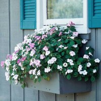 Landscaping: Fresh Ideas for Window Planter | Interior ...