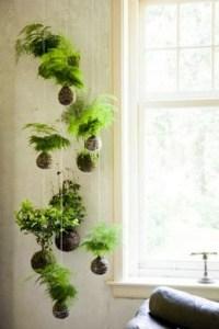 Indoor Hanging Plants | www.pixshark.com - Images ...