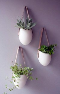 Hanging indoor plants and patio plants  hanging plants ...