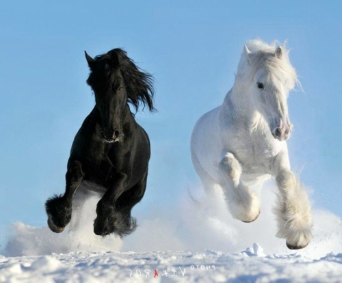 13 beautiful horses in the wild nature