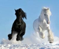 13 beautiful horses in the wild nature | Interior Design ...