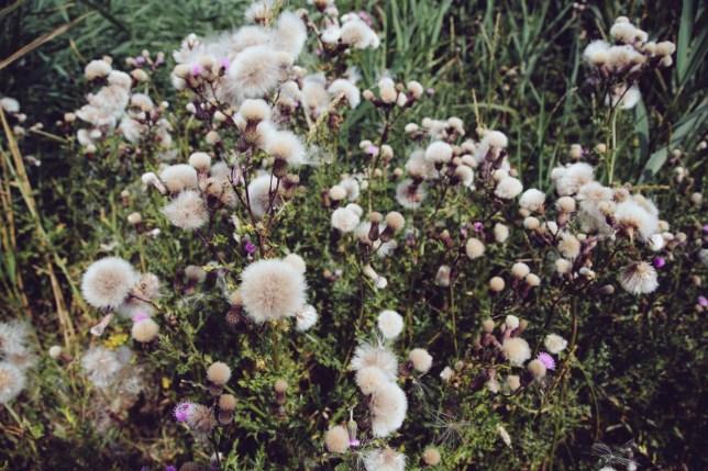 grasses-3