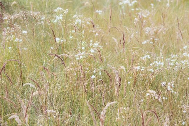 grasses-4