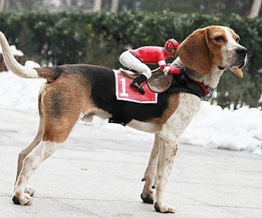 Jockey Rider Pet Costume
