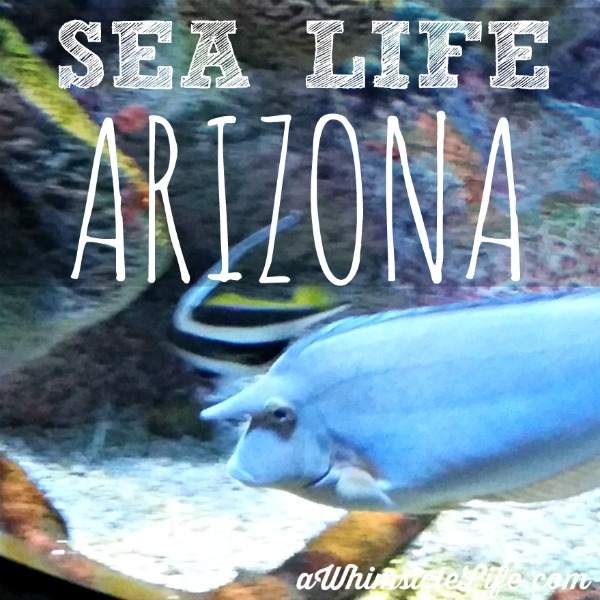 Sea life arizona aquarium in phoenix Arizona mills mall aquarium