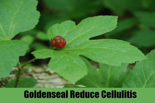 Goldenseal Reduce Cellulitis