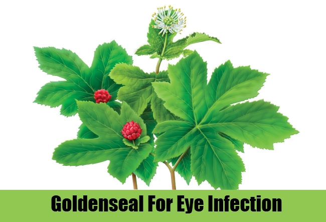 Goldenseal For Eye Infection