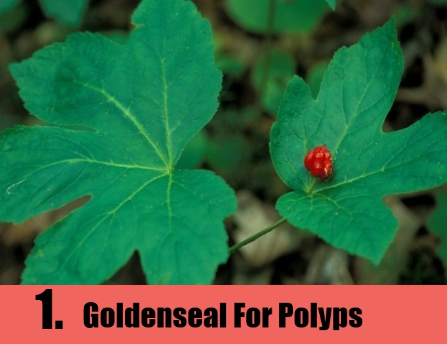 Goldenseal For Polyps