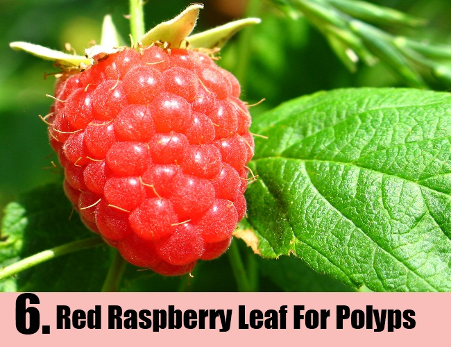 Red Raspberry Leaf For Polyps